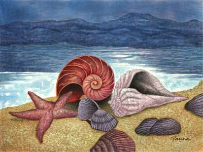 Sea shell paintings - Sea Shells 3 - Panna Paintings