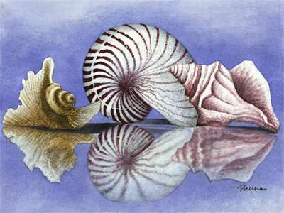 Shell paintings on canvas - Sea Shells 4 - Panna Paintings